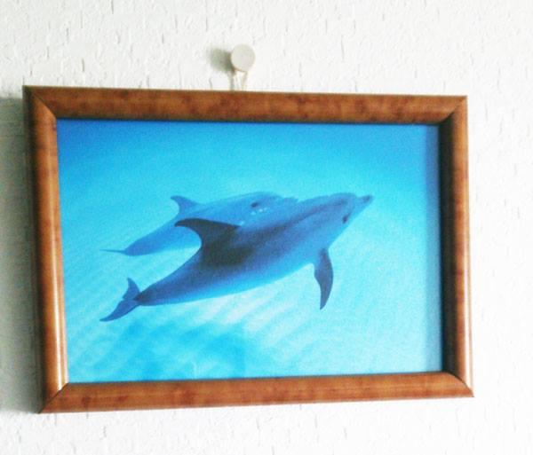 イルカのフォトフレーム2