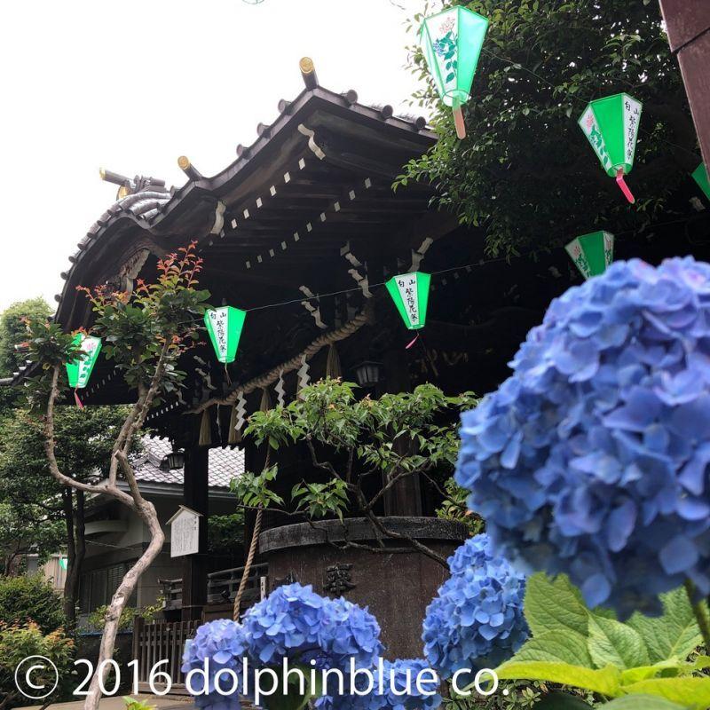 白山神社の紫陽花祭