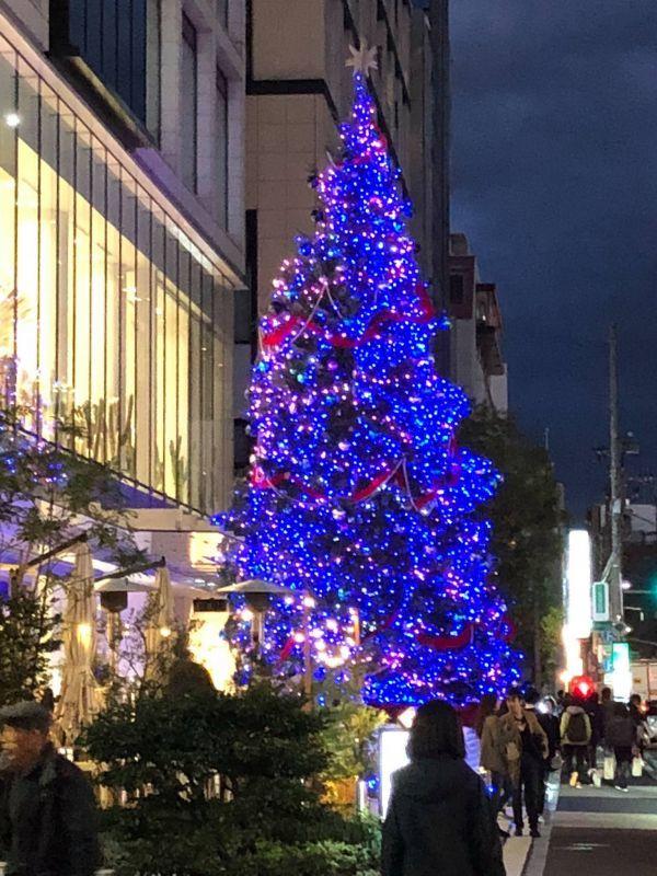 表参道のクリスマスツリー